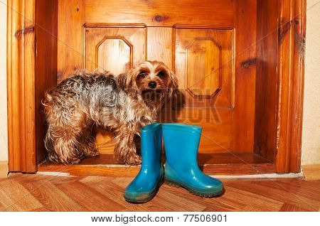 Poor Dog Near Door