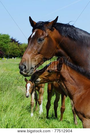 Horse mare with her foal