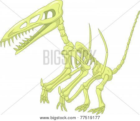 Pteronodon skeleton