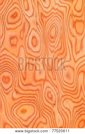 Texture Of Root Wood, Natural Rural Tree Background