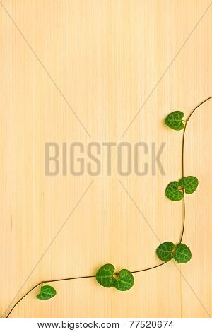 Wooden Texture With Green Branch Tendril Ceropegia Woodii
