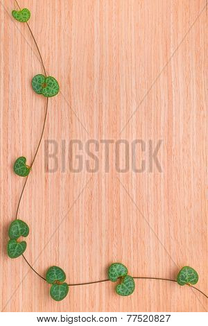 Wooden Texture With Framed Branch Tendril Ceropegia Woodii