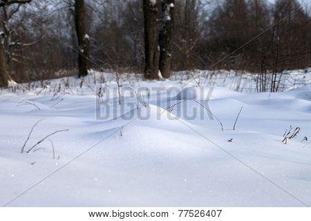 Snowdrift In Winter Forest