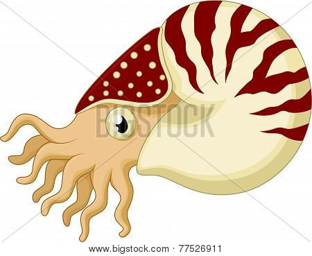 Vector Cartoon nautilus