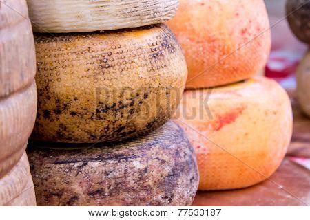 Molds Of Pecorino Cheese