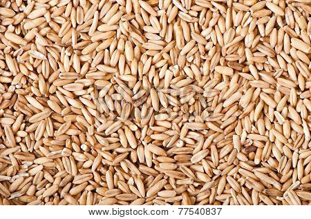 oat grains background