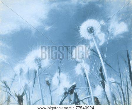 Dandelion Clocks With Art Filter