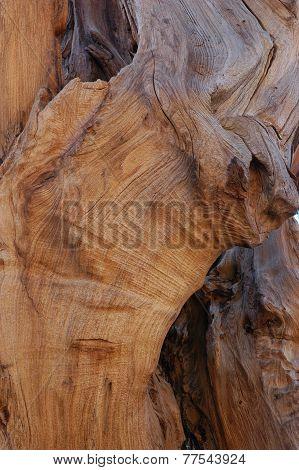 Redwood curly grain