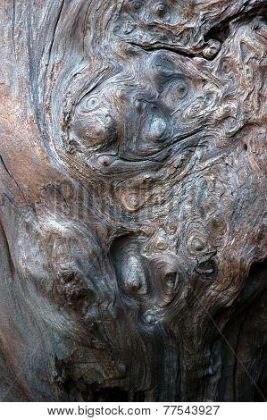 Weathered Burl Texture
