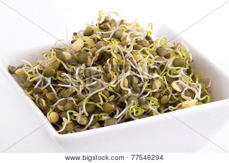 green lentil sprouts