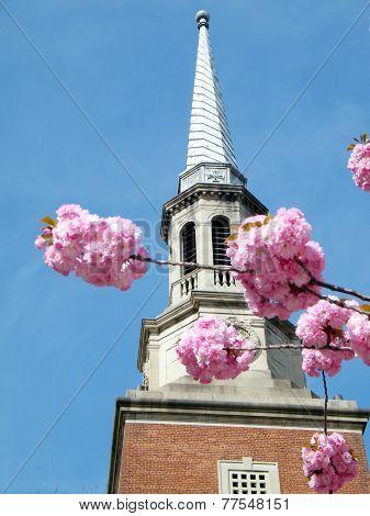Washington Sakura In Front Of  Church Tower 2010