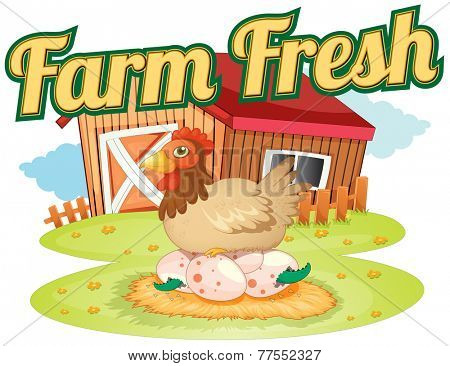 A farm fresh template showing a hen laying eggs on a white background