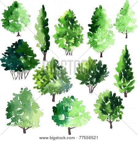 set of different deciduous trees