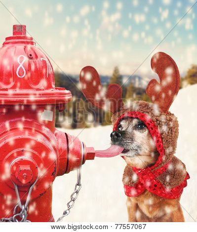 a chihuahua dressed up for christmas as a reindeer licking a frozen pole with his tongue toned with a soft instagram like filter effect