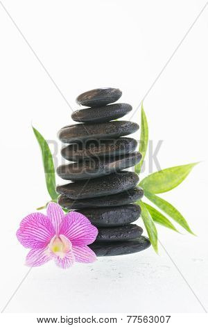 Purple Dendrobium Orchid And Stones
