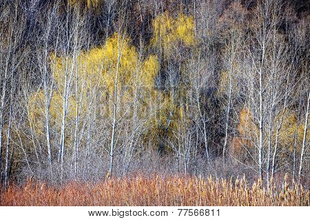 Nature landscape of leafless bare trees and dry grasses in winter ravine