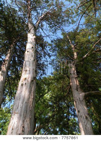 Nebraksa Tree View