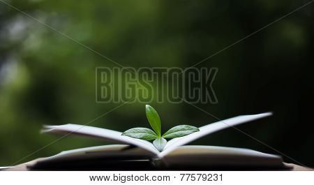 Book With Leaves On Nature Background