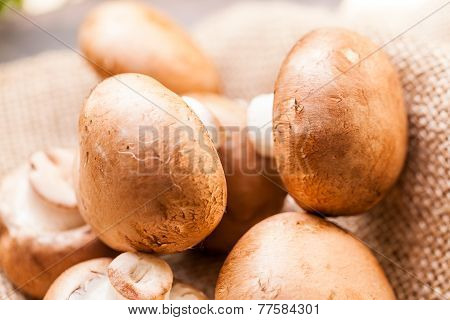 Fresh Brown Agaricus Mushrooms