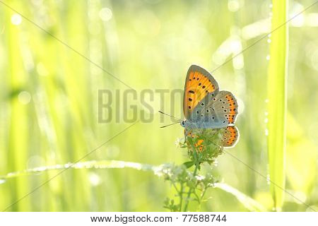 Butterfly on a spring meadow