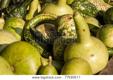 Kalebassenkürbirs Cucurbita Pumpkin Pumpkins From Autumn Harvest
