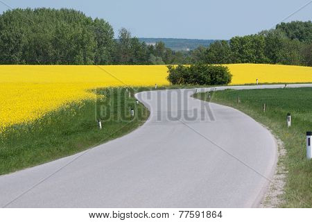 Winding Country Road With Canola Field