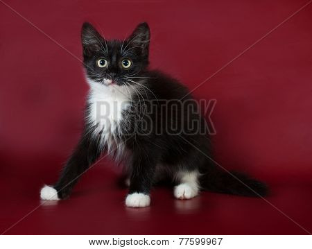 Black And White Fluffy Kitten Sneaking On Burgundy