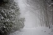 stock photo of slippery-roads  - Snowy trees along slippery winter road covered in thick snow - JPG