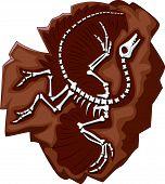 picture of dinosaurus  - illustration of Cartoon Archeopteryx fossil isolated on white - JPG