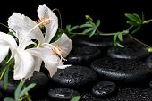 image of tendril  - beautiful spa still life of blooming white hibiscus green twig with tendril passionflower and drops on zen basalt stones - JPG