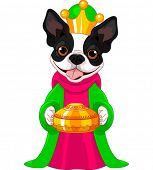 image of melchior  - Boston terrier - JPG