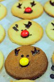 image of rudolf  - round and tasty Rudolf Cookies for Christmas - JPG