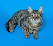 foto of yellow tabby  - Tabby kitten with yellow eyes lying on blue background - JPG
