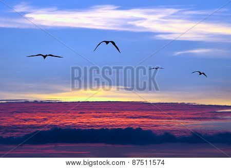 Sunset Sky Birds Aerial Flying And Soaring Above The Clouds
