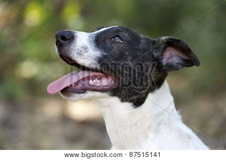 Puppy Dog Eager Curious Cute Outdoor Closeup Tongue Panting
