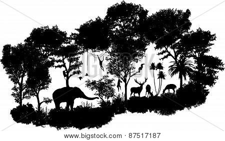 animal of wildlife Including elephant, monkeys, deers, rabbits, birds