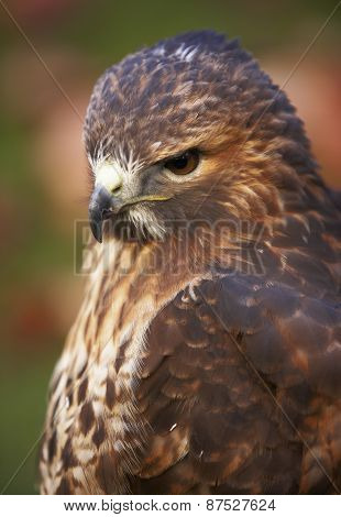 Eagle Head With Green Tone Background In Spain