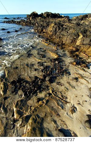 Madagascar    Andilana Beach Seaweed In Indian
