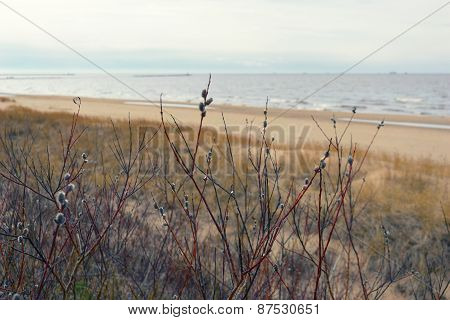 Willow Branches In The Dunes Of The Baltic Sea