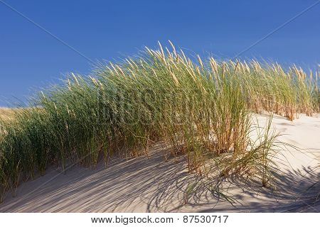 Green Grass In The Dunes On A Background Of Blue Sky