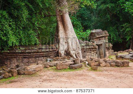 Ta Prohm Temple, Angkor, Near Siem Reap, Cambodia