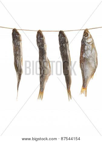 Salted Fish On A Rope Vertically