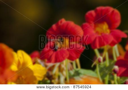 Blurred Seasonal Flower With Dark Background
