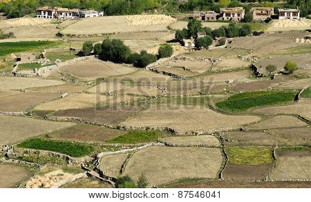 Aerial View Of Green Ladakh Agricultural  Landscape