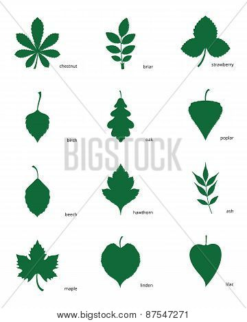 Set Of Silhouettes Of Leaves Of Different Trees
