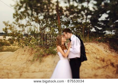 The Groom Kisses The Bride-to-nose On The Beach Among Bushes