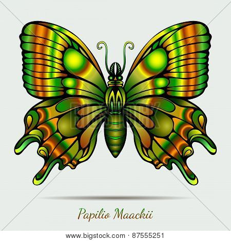 Fantastic Papilio Maackii Butterfly