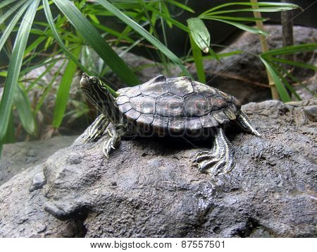 A Turtle Sitting on a Rock