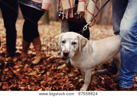 Dog On A Leash In The Woods