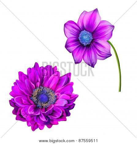 illustration of Bright colorful Dahlia flower, Spring flower.Isolated on white background.